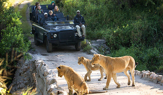 Guided game drive in Lion Sands Game Reserve.